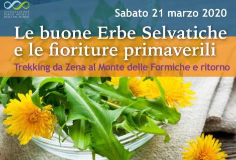 Sabato 21 Mar – Le buone Erbe Selvatiche e le fioriture primaverili